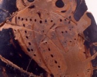 Riccione Starobylá vykopávka